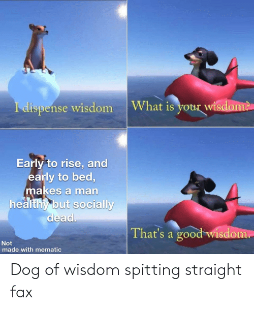 Spitting: Dog of wisdom spitting straight fax