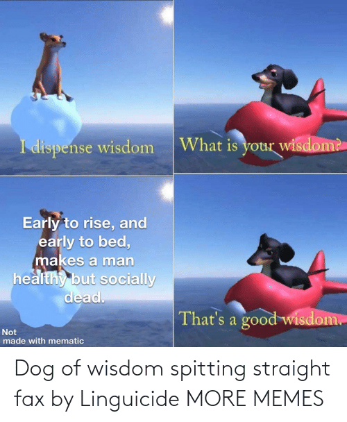 Spitting: Dog of wisdom spitting straight fax by Linguicide MORE MEMES