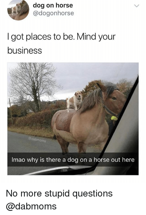 Business, Horse, and Dank Memes: dog on horse  @dogonhorse  I got places to be. Mind your  business  @dabmoms  Imao why is there a dog on a horse out here No more stupid questions @dabmoms