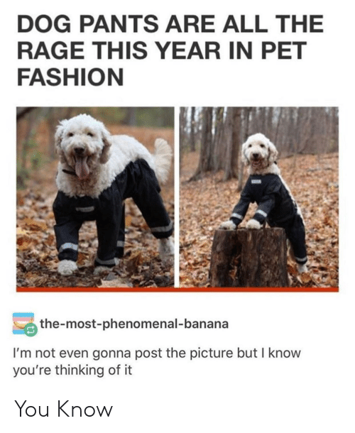 Fashion, Phenomenal, and Banana: DOG PANTS ARE ALL THE  RAGE THIS YEAR IN PET  FASHION  the-most-phenomenal-banana  I'm not even gonna post the picture but I know  you're thinking of it You Know