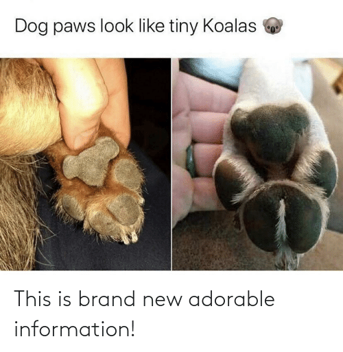 brand: Dog paws look like tiny Koalas This is brand new adorable information!