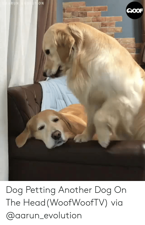 Facebook, Head, and Instagram: Dog Petting Another Dog On The Head(WoofWoofTV) via @aarun_evolution