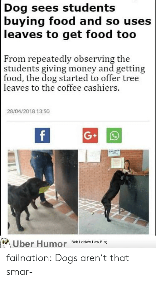 Dogs, Food, and Money: Dog sees students  buying food and so usess  leaves to get food too  From repeatedly observing the  students giving money and getting  food, the dog started to offer tree  leaves to the coffee cashiers.  28/04/2018 13:50  Bob Loblaw Law Blog  Uber Humor failnation:  Dogs aren't that smar-