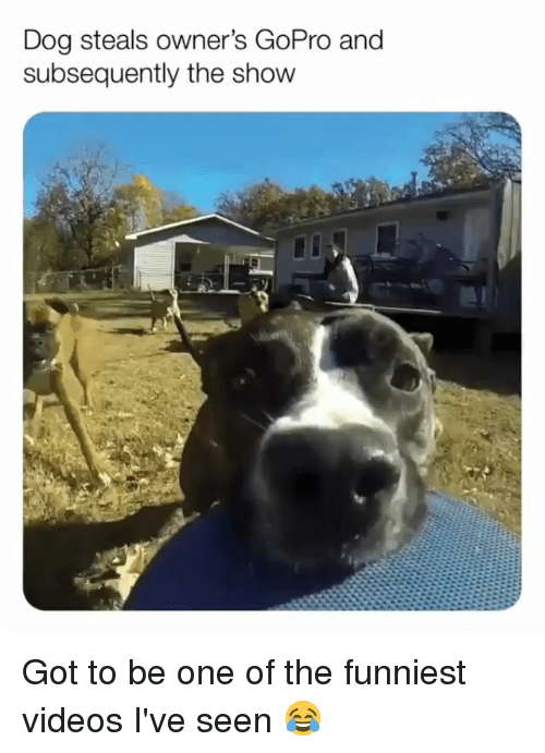 Memes, Videos, and GoPro: Dog steals owner's GoPro and  subsequently the show Got to be one of the funniest videos I've seen 😂