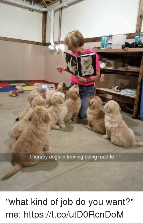 "coed: DOG  Therapy dogs in training being read to ""what kind of job do you want?"" me: https://t.co/utD0RcnDoM"