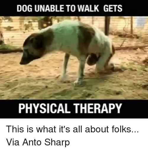 physical therapy: DOG UNABLE TO WALK GETS  PHYSICAL THERAPY This is what it's all about folks...  Via Anto Sharp