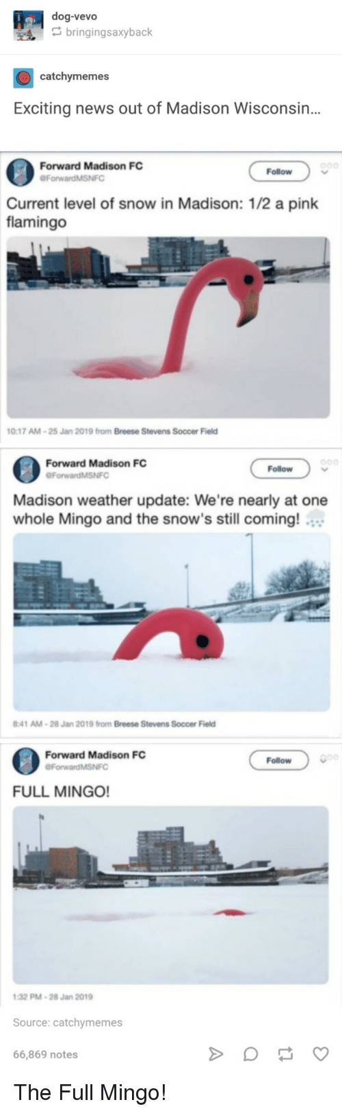 Wisconsin: dog-vevo  bringingsaxyback  catchymemes  Exciting news out of Madison Wisconsin..  Forward Madison FC  ForwardMSNFO  Follow  Current level of snow in Madison: 1/2 a pink  flamingo  0:17 AM-25 Jan  2019 from Breese Stevens  Soccer Field  Forward Madison FC  Follow  Madison weather update: We're nearly at one  whole Mingo and the snow's still coming!  :41 AM-28 Jan 2019 from Breese Stevens Soccer Field  Forward Madison FC  Follow  ForwardMSNFC  FULL MINGO!  32 PM-28 Jan 2019  Source: catchymemes  66,869 notes The Full Mingo!