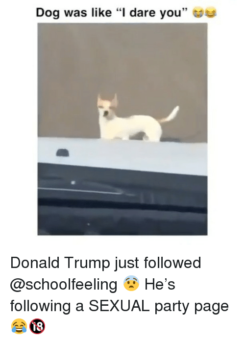 """Donald Trump, Memes, and Party: Dog was like """"l dare you"""" Donald Trump just followed @schoolfeeling 😨 He's following a SEXUAL party page 😂🔞"""