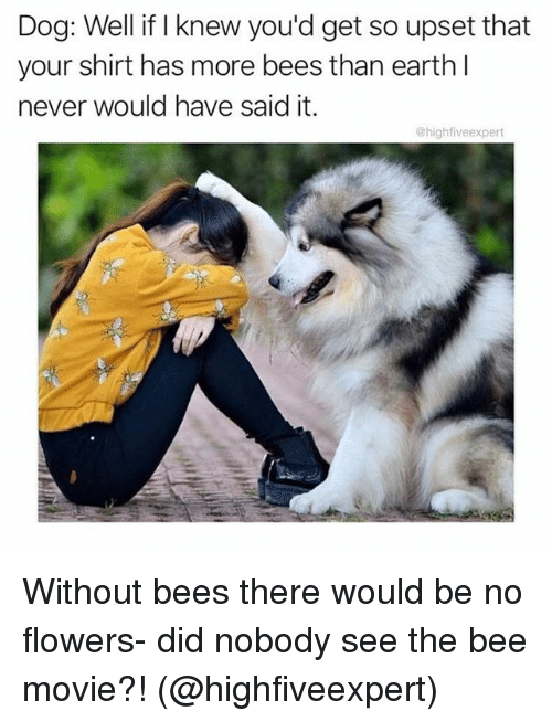 Upsetted: Dog: Well if I knew you'd get so upset that  your shirt has more bees than earth l  never would have said it.  @highfiveexpert Without bees there would be no flowers- did nobody see the bee movie?! (@highfiveexpert)