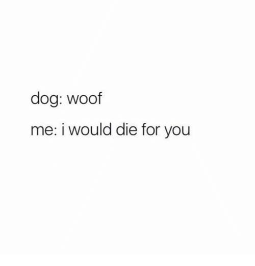 Woofe: dog: woof  me: i would die for you