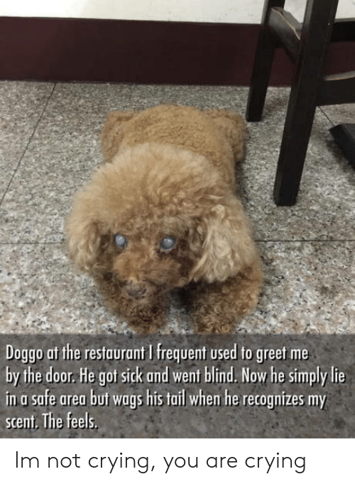 Af, Crying, and Not Crying: Doggo af the restaurant I frequent used to greet me  by the door. He got sick and went blind. Now he simply lie  in a safe area but wags his tail whem he recognizes my  scent. The feels Im not crying, you are crying