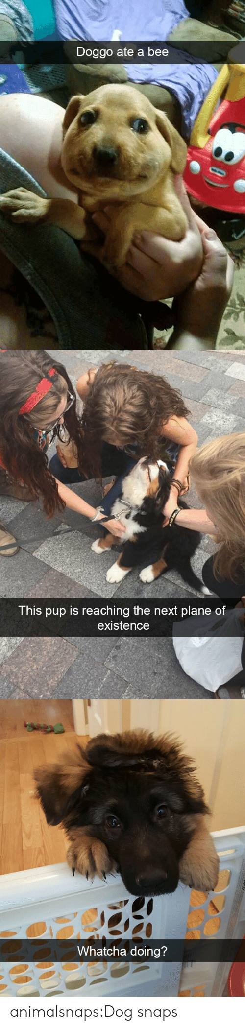 Target, Tumblr, and Blog: Doggo ate a bee   This pup is reaching the next plane of  existence   Whatcha doing?  CA animalsnaps:Dog snaps