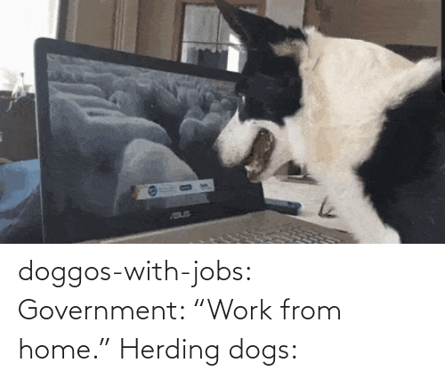 "Government: doggos-with-jobs:  Government: ""Work from home."" Herding dogs:"