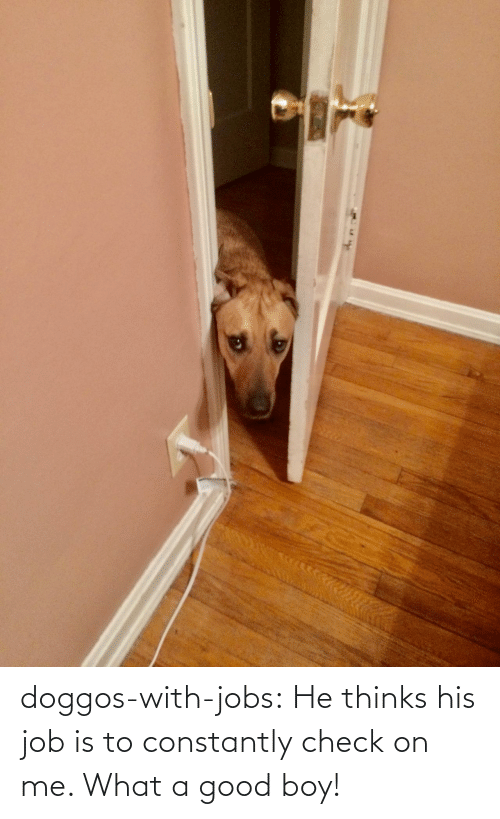 good boy: doggos-with-jobs:  He thinks his job is to constantly check on me. What a good boy!