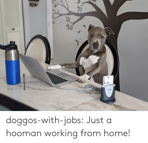 Home: doggos-with-jobs:  Just a hooman working from home!