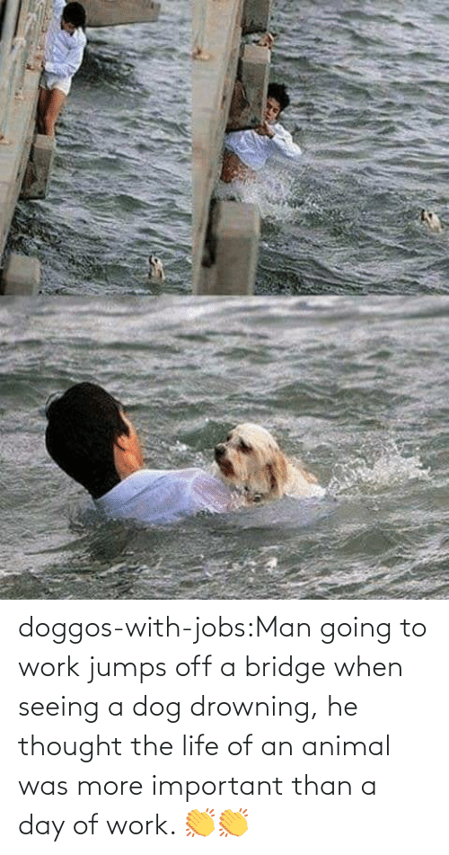 bridge: doggos-with-jobs:Man going to work jumps off a bridge when seeing a dog drowning, he thought the life of an animal was more important than a day of work. 👏👏