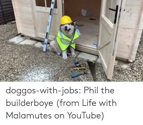 Jobs: doggos-with-jobs:  Phil the builderboye (from Life with Malamutes on YouTube)
