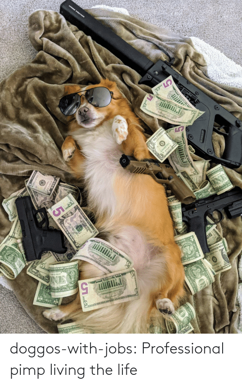 professional: doggos-with-jobs:  Professional pimp living the life