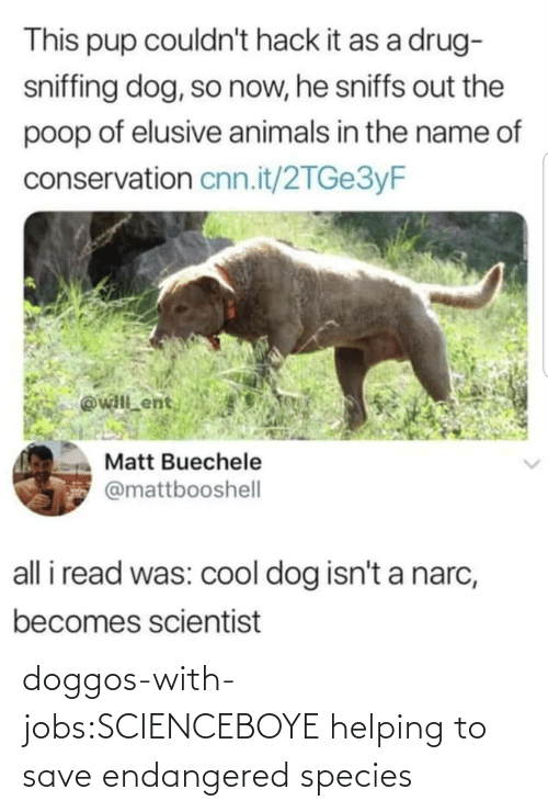 Endangered: doggos-with-jobs:SCIENCEBOYE helping to save endangered species