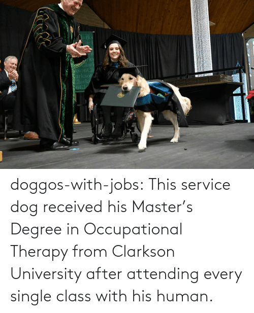degree: doggos-with-jobs:  This service dog received his Master's Degree in Occupational Therapy from Clarkson University after attending every single class with his human.