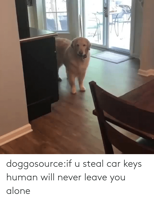 keys: doggosource:if u steal car keys human will never leave you alone