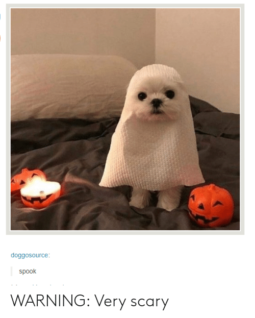 spook: doggosource  Spook WARNING: Very scary