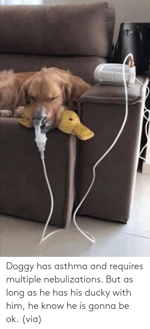 reddit: Doggy has asthma and requires multiple nebulizations. But as long as he has his ducky with him, he know he is gonna be ok. (via)
