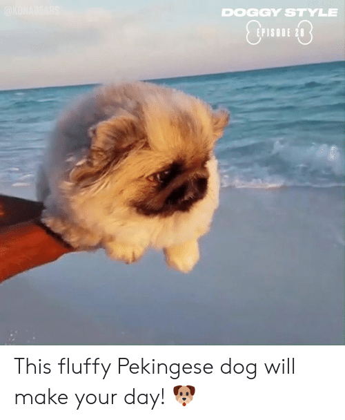 doggy: DOGGY STYLE  EPISODE 28 This fluffy Pekingese dog will make your day! 🐶