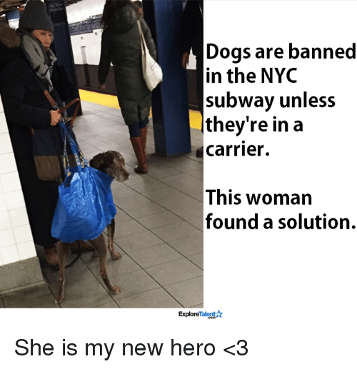 talent explore: Dogs are banned  in the NYC  subway unless  they're in a  Carrier.  This woman  found a solution.  Talent  Explore She is my new hero <3