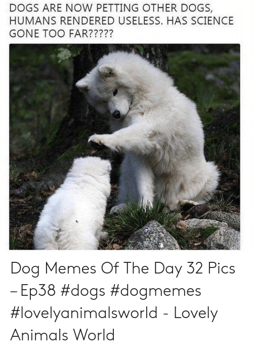 Animals, Dogs, and Memes: DOGS ARE NOW PETTING OTHER DOGS,  HUMANS RENDERED USELESS. HAS SCIENCE  GONE TOO FAR????? Dog Memes Of The Day 32 Pics – Ep38 #dogs #dogmemes #lovelyanimalsworld - Lovely Animals World