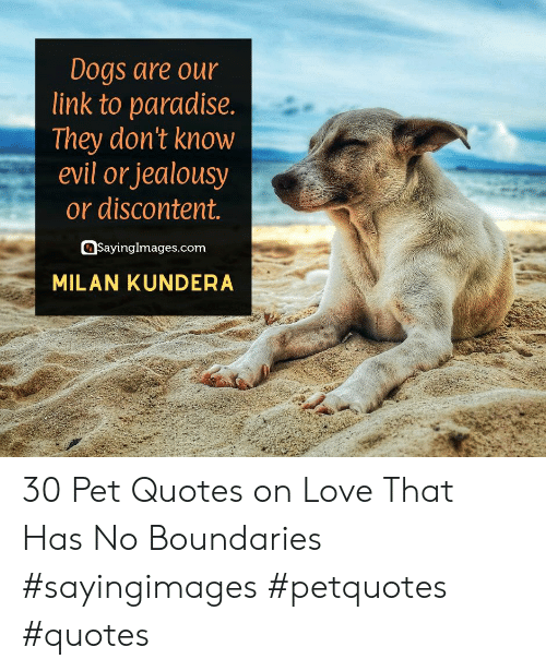 Jealousy: Dogs are our  link to paradise.  |They don't know  evil or jealousy  or discontent.  SayingImages.com  MILAN KUNDERA 30 Pet Quotes on Love That Has No Boundaries #sayingimages #petquotes #quotes