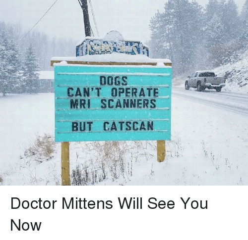 scanners: DOGS  CAN'T OPERATE  MRI SCANNERS  BUT CATSCAN Doctor Mittens Will See You Now
