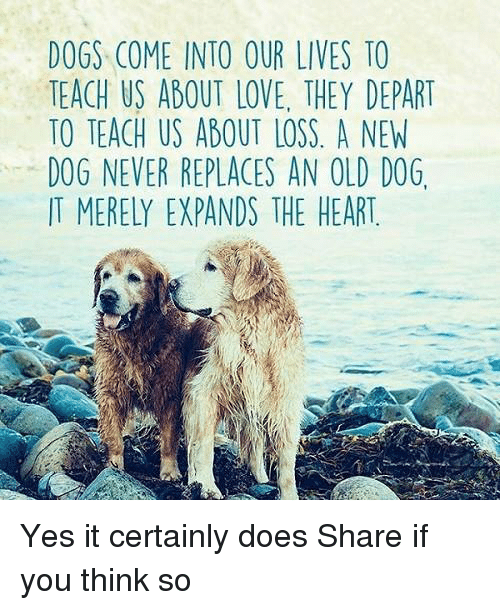 departed: DOGS COME INTO OUR LIVES TO  TEACH US ABOUT LOVE. THEY DEPART  TO TEACH US ABOUT LOSS A NEW  DOG NEVER REPLACES AN OLD DOG.  IT MERELY EXPANDS THE HEART Yes it certainly does Share if you think so