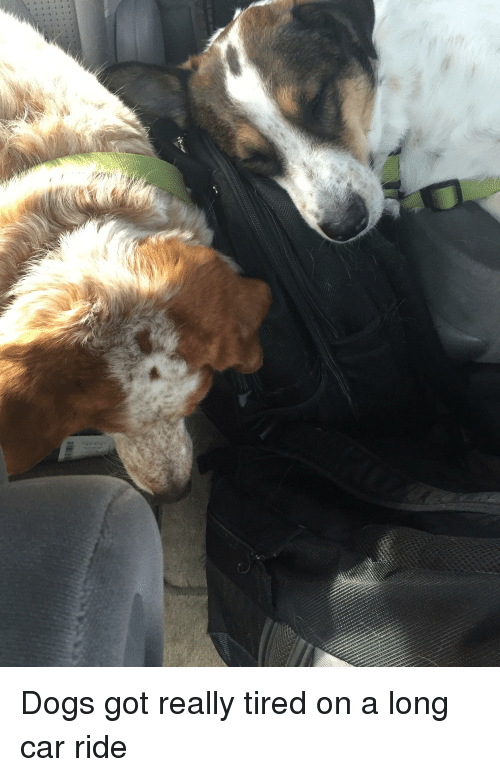 Dogs, Got, and Car