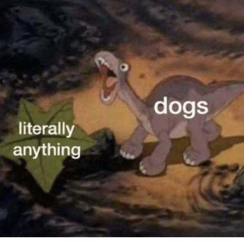 Dogs, Anything, and Literally: dogs  literally  anything