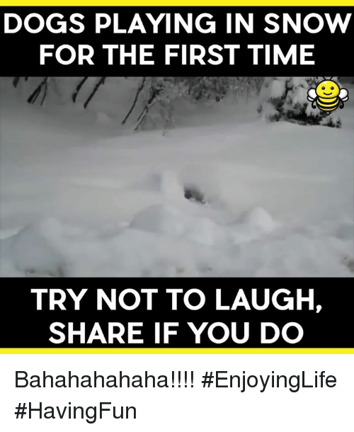 try not to laugh: DOGS PLAYING IN SNOW  FOR THE FIRST TIME  TRY NOT TO LAUGH,  SHARE IF YOU DO Bahahahahaha!!!! #EnjoyingLife #HavingFun