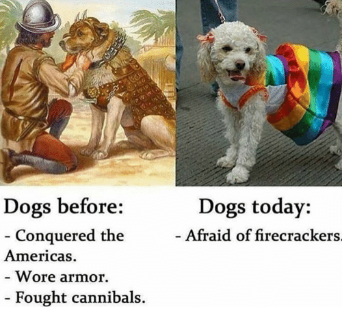 armored: Dogs today:  Afraid of firecrackers  Dogs before:  Conquered the  Americas  Wore armor.  Fought cannibals.