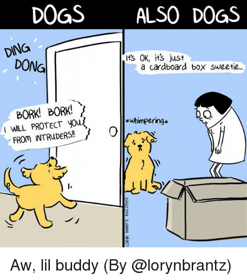 cardboard box: DOGSALSO DOGS  DING  ts OK, its just  DONG  a cardboard box sweetie.  BORK! BORK!  I WILL PROTECT yous  *uhimpering*  uS  ノ」 Aw, lil buddy (By @lorynbrantz)