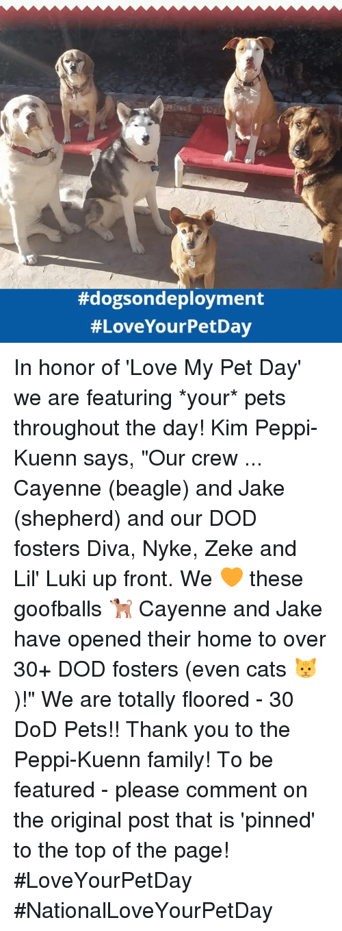 """Cats, Family, and Love: In honor of 'Love My Pet Day' we are featuring *your* pets throughout the day!  Kim Peppi-Kuenn says, """"Our crew ... Cayenne (beagle) and Jake (shepherd) and our DOD fosters Diva, Nyke, Zeke and Lil' Luki up front. We 🧡 these goofballs 🐕 Cayenne and Jake have opened their home to over 30+ DOD fosters (even cats 🐱)!""""   We are totally floored - 30 DoD Pets!! Thank you to the Peppi-Kuenn family!   To be featured - please comment on the original post that is 'pinned' to the top of the page!  #LoveYourPetDay #NationalLoveYourPetDay"""