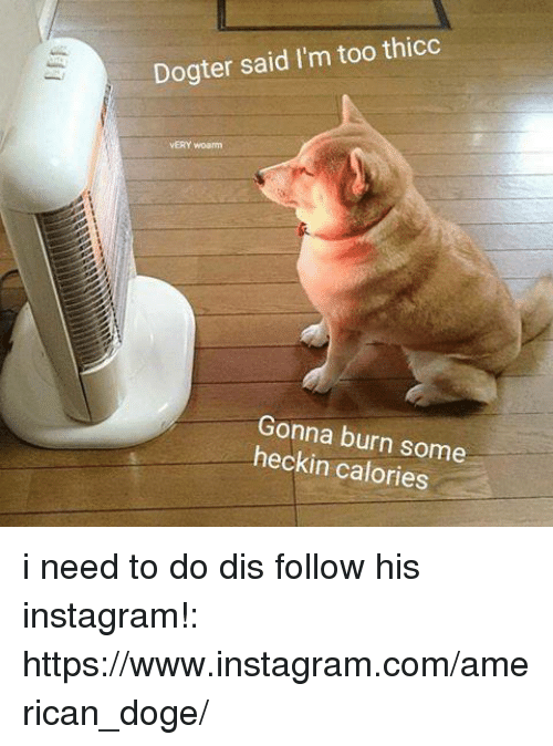 doges: Dogter said I'm too thicc  VERY woamm  Gonna burn some  heckin calories i need to do dis follow his instagram!: https://www.instagram.com/american_doge/