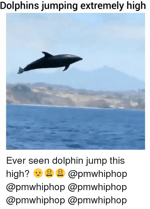 Dolphinately: Dolphins jumping extremely high Ever seen dolphin jump this high? 😦😩😩 @pmwhiphop @pmwhiphop @pmwhiphop @pmwhiphop @pmwhiphop