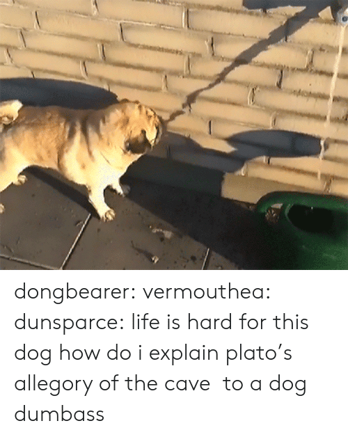 Life, Tumblr, and Blog: dongbearer: vermouthea:  dunsparce: life is hard for this dog how do i explain plato's allegory of the cave to a dog  dumbass