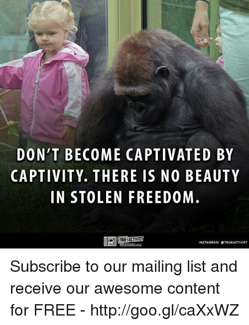 captivated: DON'T BECOME CAPTIVATED BY  CAPTIVITY. THERE IS NO BEAUTY  IN STOLEN FREEDOM  TRUE ACTIVIST  INSTAGRAM OTRUEACTIVIST Subscribe to our mailing list and receive our awesome content for FREE - http://goo.gl/caXxWZ