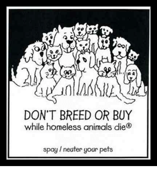 Animals, Homeless, and Memes: DON'T BREED OR BUY  while homeless animals die  spay 1 neuter your pets