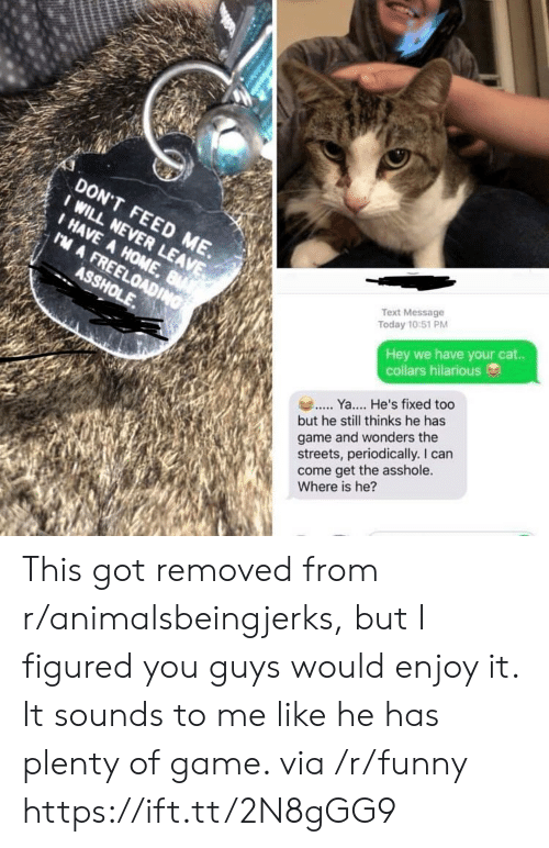 Funny, Streets, and Game: DON'T FEED ME.  I HAVE A HOME  Text Message  Today 10:51 PM  Hey we have your cat..  collars hilarious  Y. He's fixed too  but he still thinks he has  game and wonders the  streets, periodically. I can  come get the asshole.  Where is he? This got removed from r/animalsbeingjerks, but I figured you guys would enjoy it. It sounds to me like he has plenty of game. via /r/funny https://ift.tt/2N8gGG9