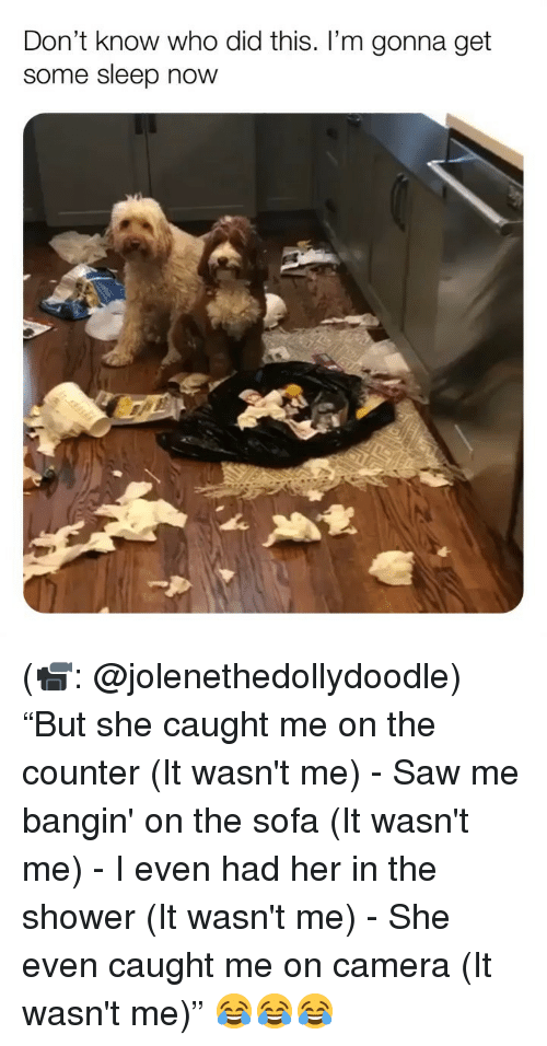 """wasnt me: Don't know who did this. I'm gonna get  some sleep now (📹: @jolenethedollydoodle) """"But she caught me on the counter (It wasn't me) - Saw me bangin' on the sofa (It wasn't me) - I even had her in the shower (It wasn't me) - She even caught me on camera (It wasn't me)"""" 😂😂😂"""