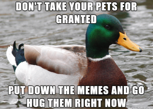 The Memes: DON'T TAKE YOUR PETS FOR  GRANTED  PUT DOWN THE MEMES AND G0  HUG THEM RIGHT NOW  made on Imgur