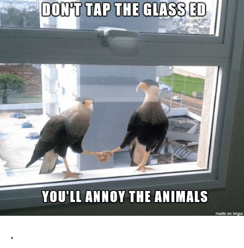 Glassed: DON'T TAP THE GLASSED  YOU'LL ANNOY THE ANIMALS  made on imgur .