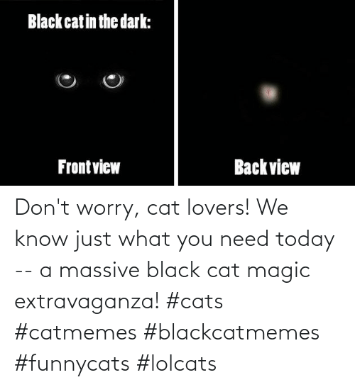 Magic: Don't worry, cat lovers! We know just what you need today -- a massive black cat magic extravaganza! #cats #catmemes #blackcatmemes #funnycats #lolcats