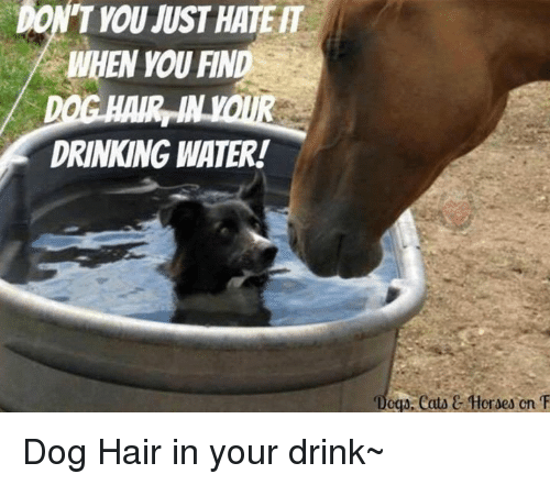 """Eata: DON'T YOU MUST HATER  DRINKING WATER!  """"Doga, eata C Horses cn T Dog Hair in your drink~"""
